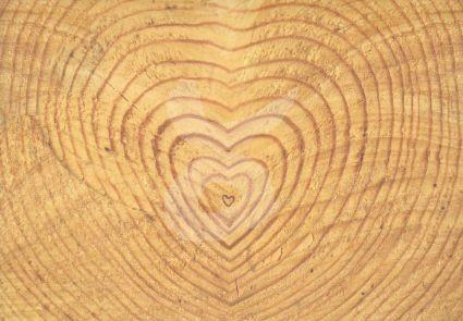 Baum-Herz Jahresringe Grußkarte